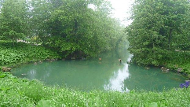 Principale source du Loiret - le Bouillon